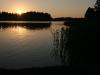 Saulriets pie Zvirgzdu ezera Kurzemē